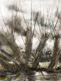 Willows sketch 2 crop