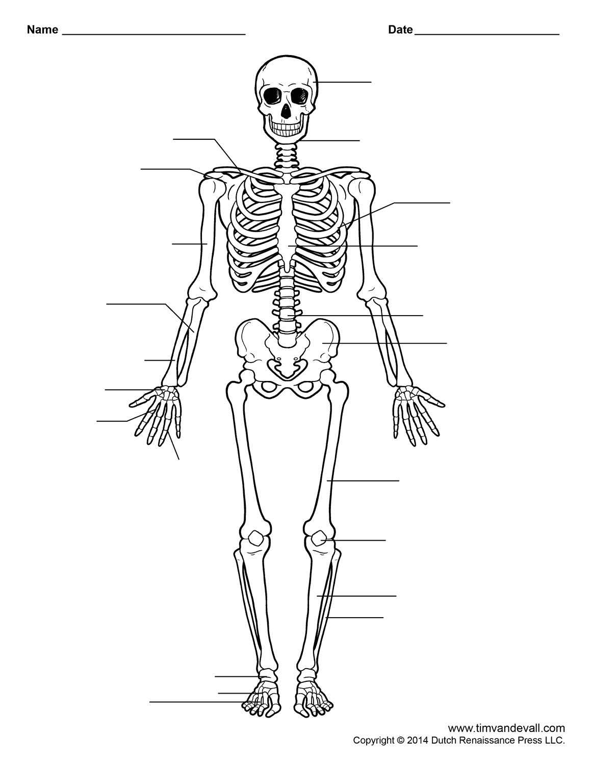 Skeletal System Worksheet Multiple Choice