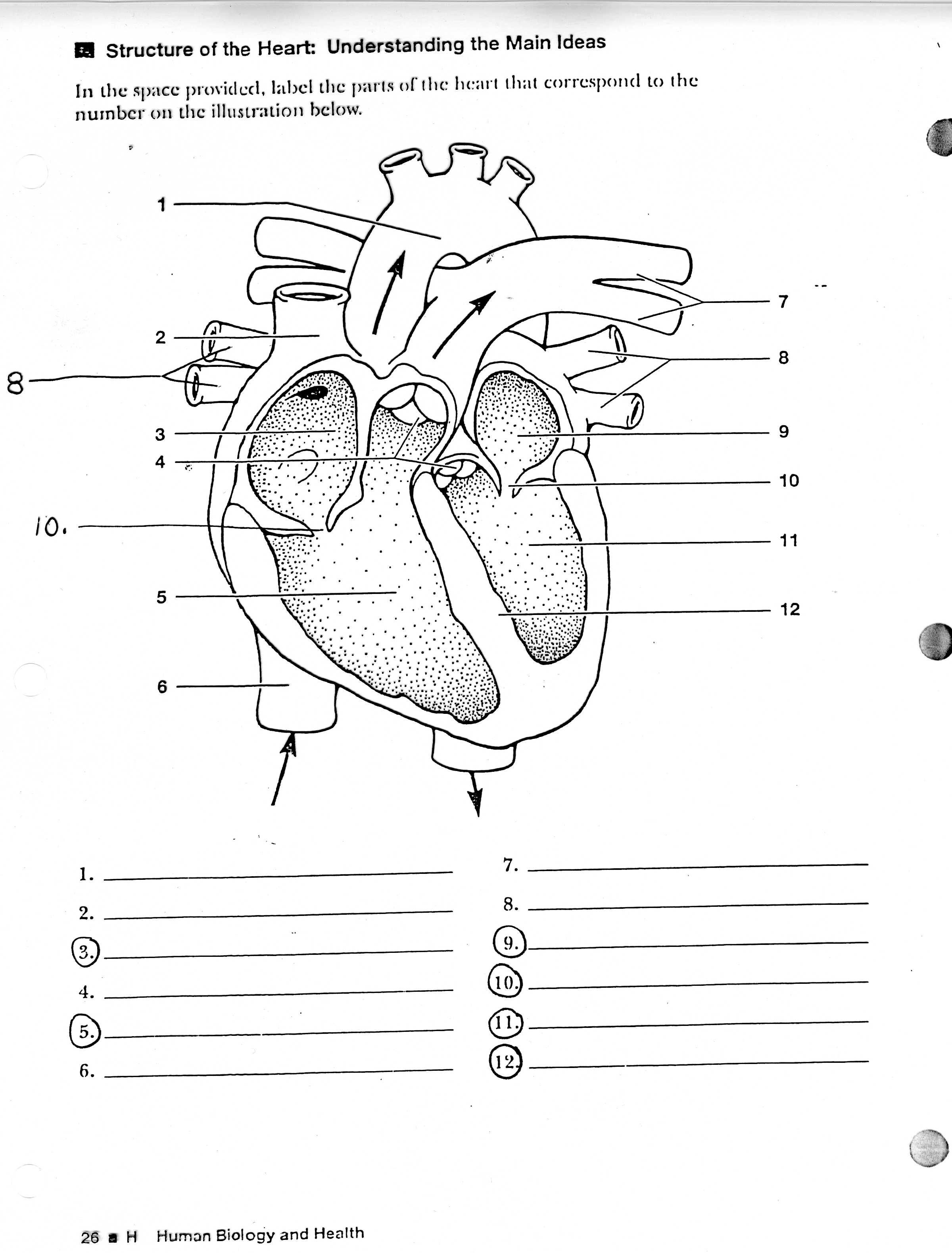 Heart Diagram Printable Worksheet
