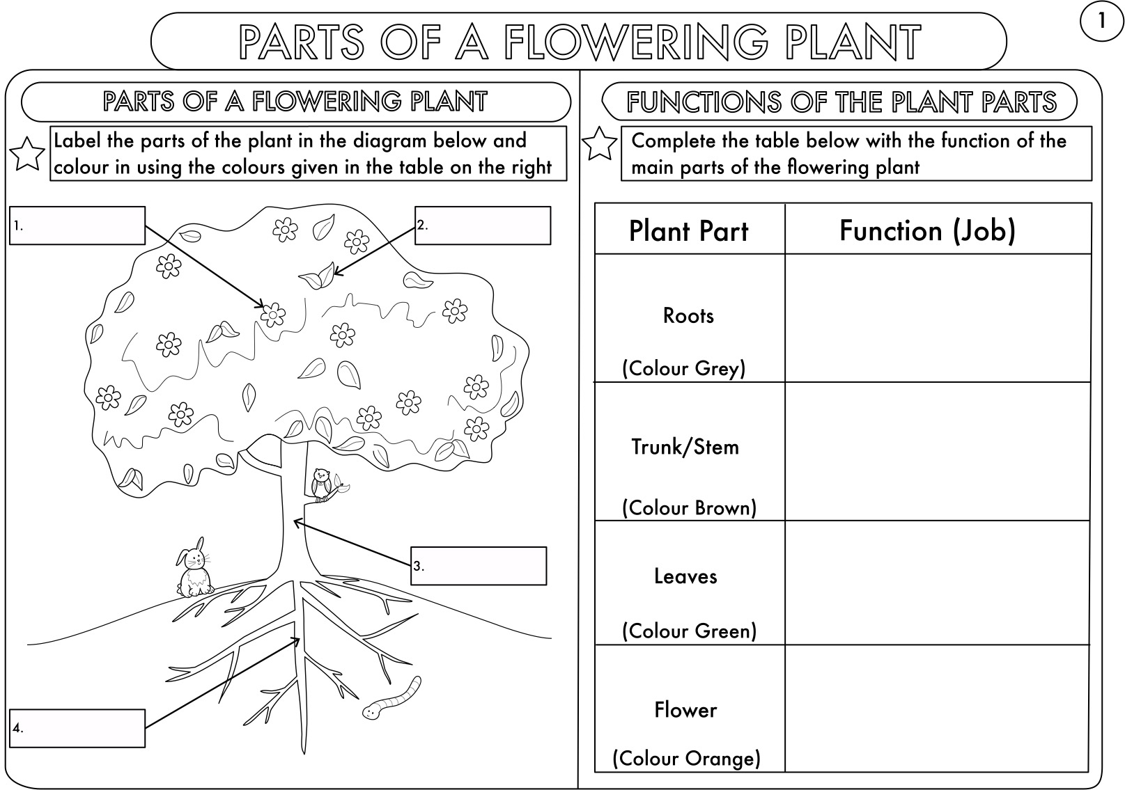 Year 3 Science Parts Of A Plant Worksheetbeckystoke