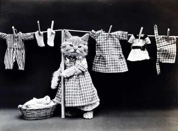 Cute Kitten Laundry Image