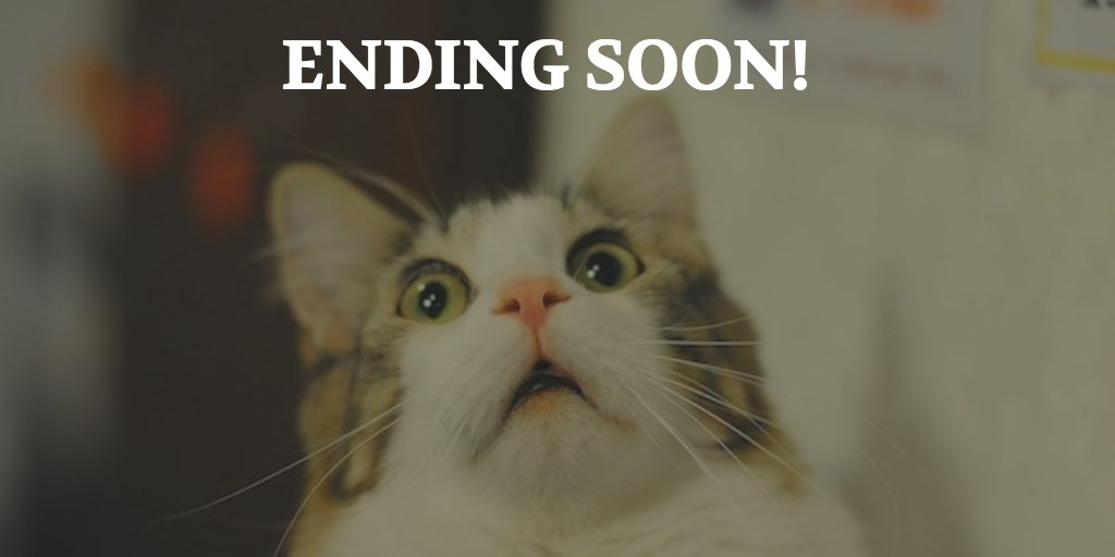 Ending Soon Cat Image