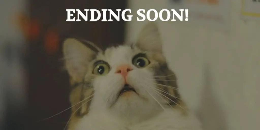 Ending Soon Cat Image