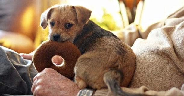 cute-puppy-dog-image
