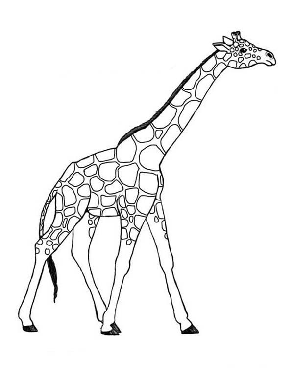 Giraffe 7260 Animals Printable Coloring Pages
