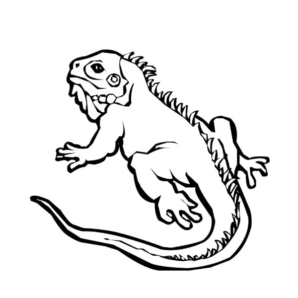 Iguana 8948 Animals Printable Coloring Pages