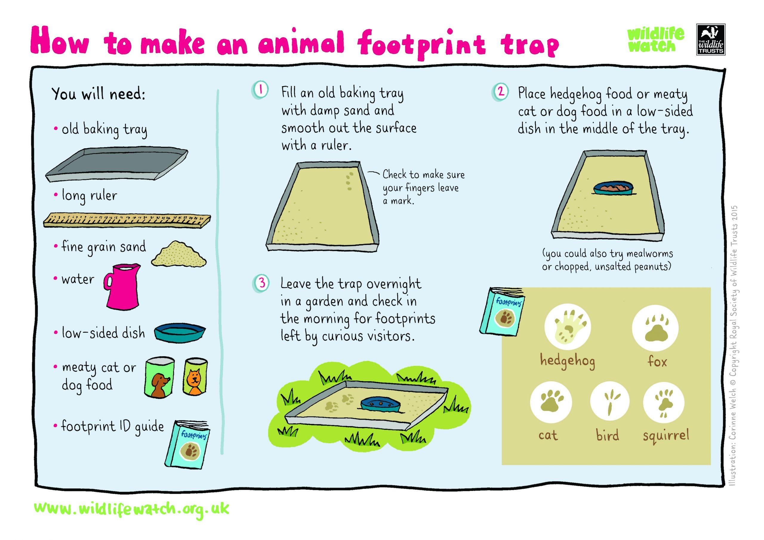 Printable Animal Track Identification Ruler