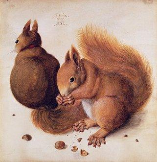 squirrels-albrecht-durer