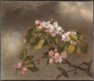2-hummingbird-and-apple-blossoms-martin-johnson-heade