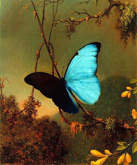 blue-morpho-butterfly-martin-johnson-heade