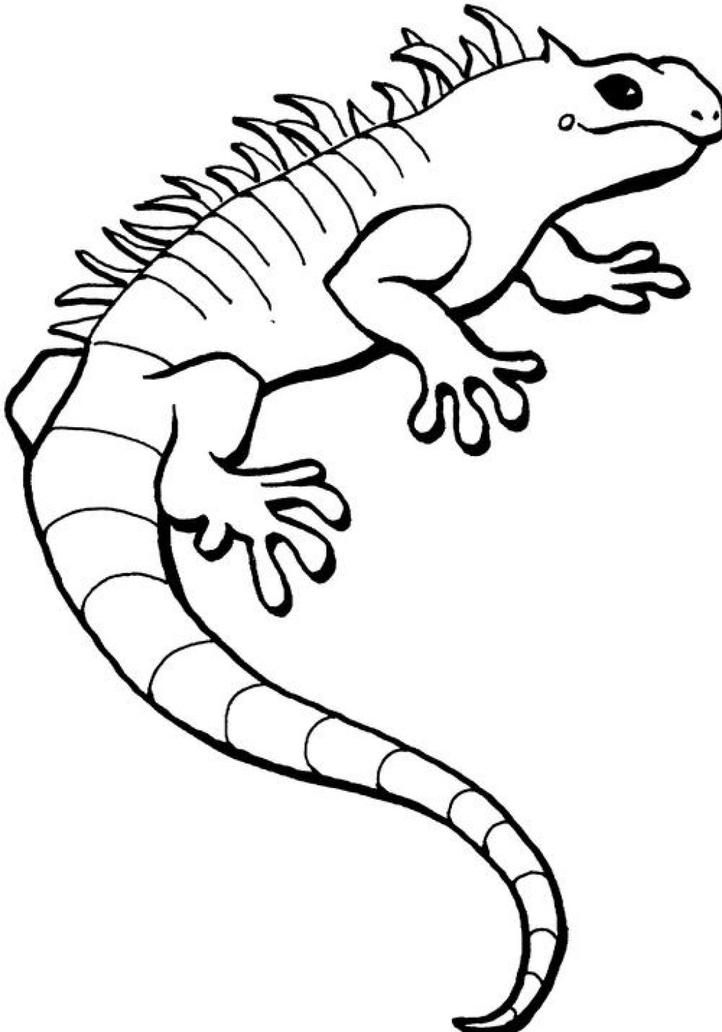 16 Printable Pictures Of Iguana Page