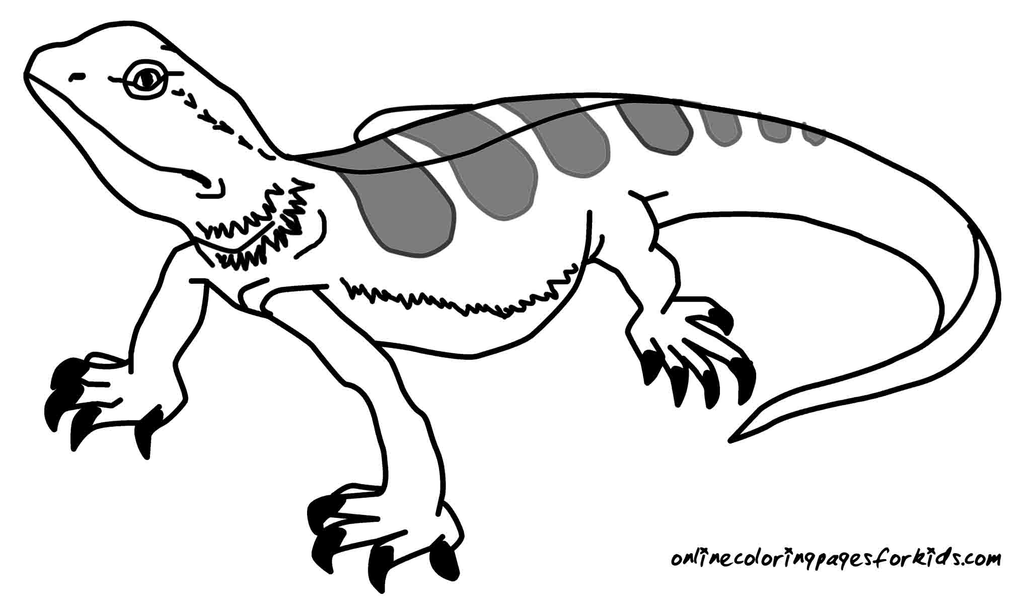 13 Lizard Coloring Pages Printable