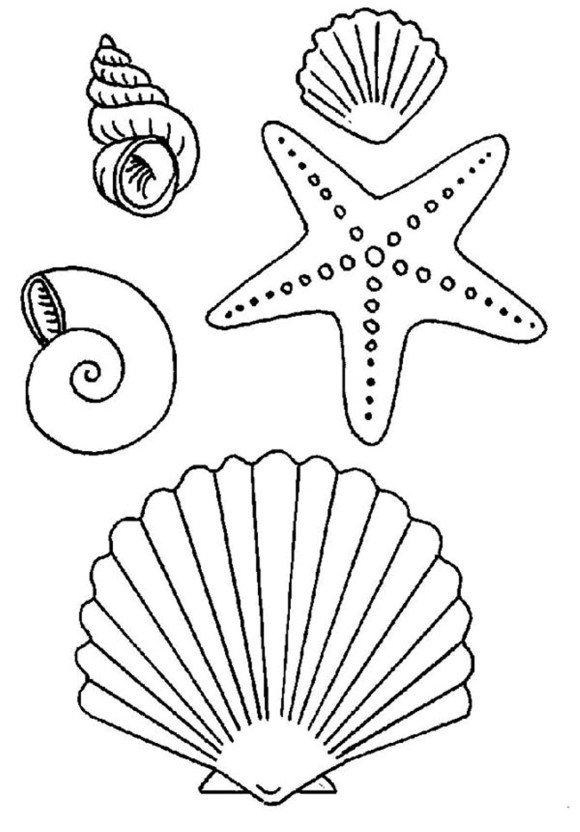 seashell coloring page printable coloring pages