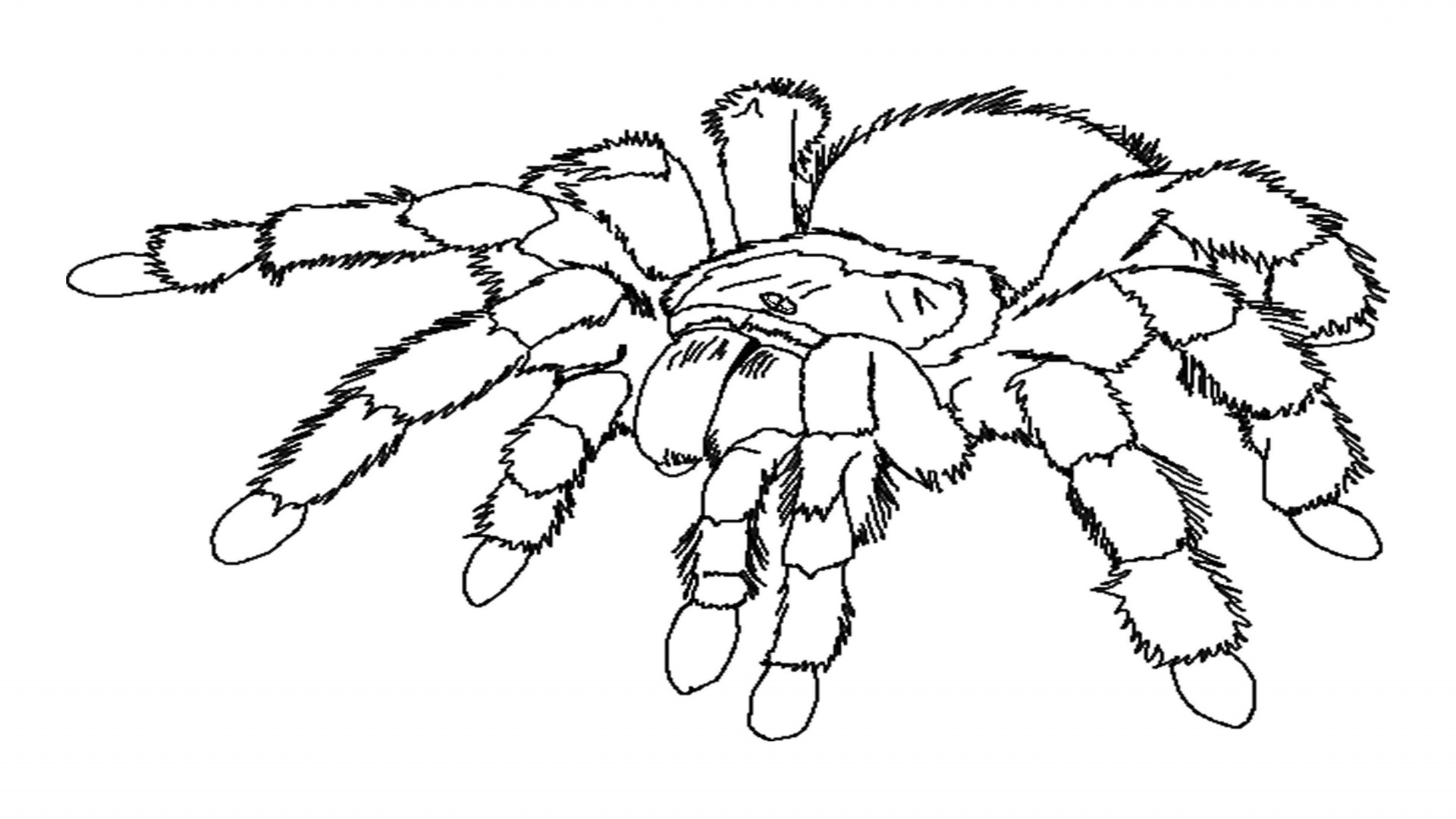 25 printable spider coloring pages print color craft