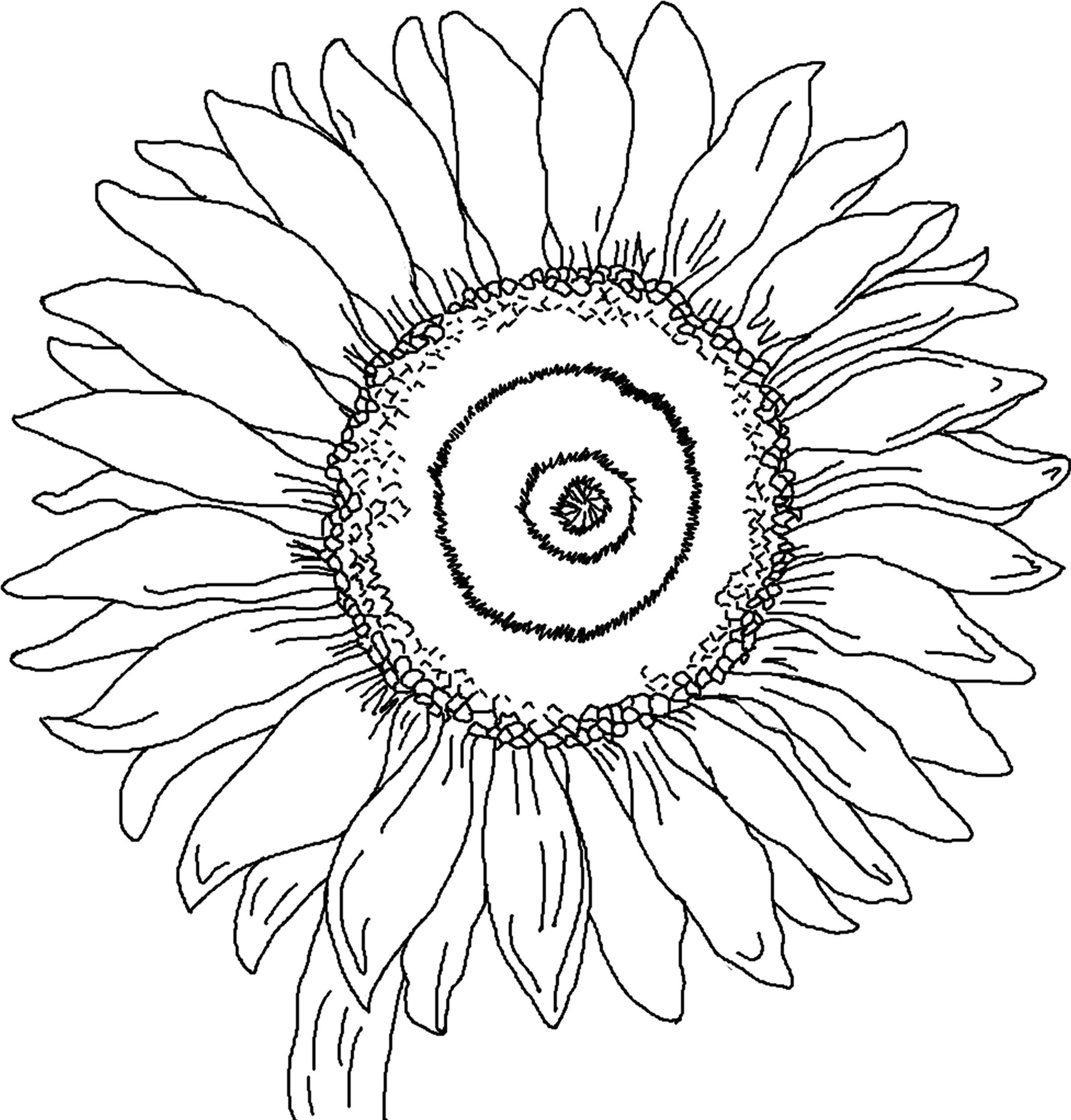 16 Sunflower Coloring Pages