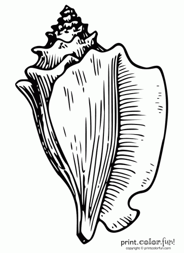 conch shell coloring page  print. color. fun!