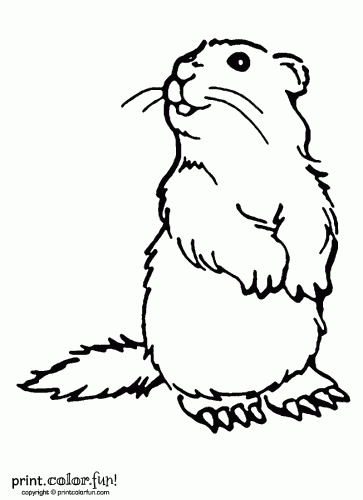 woodchuck coloring page print color fun