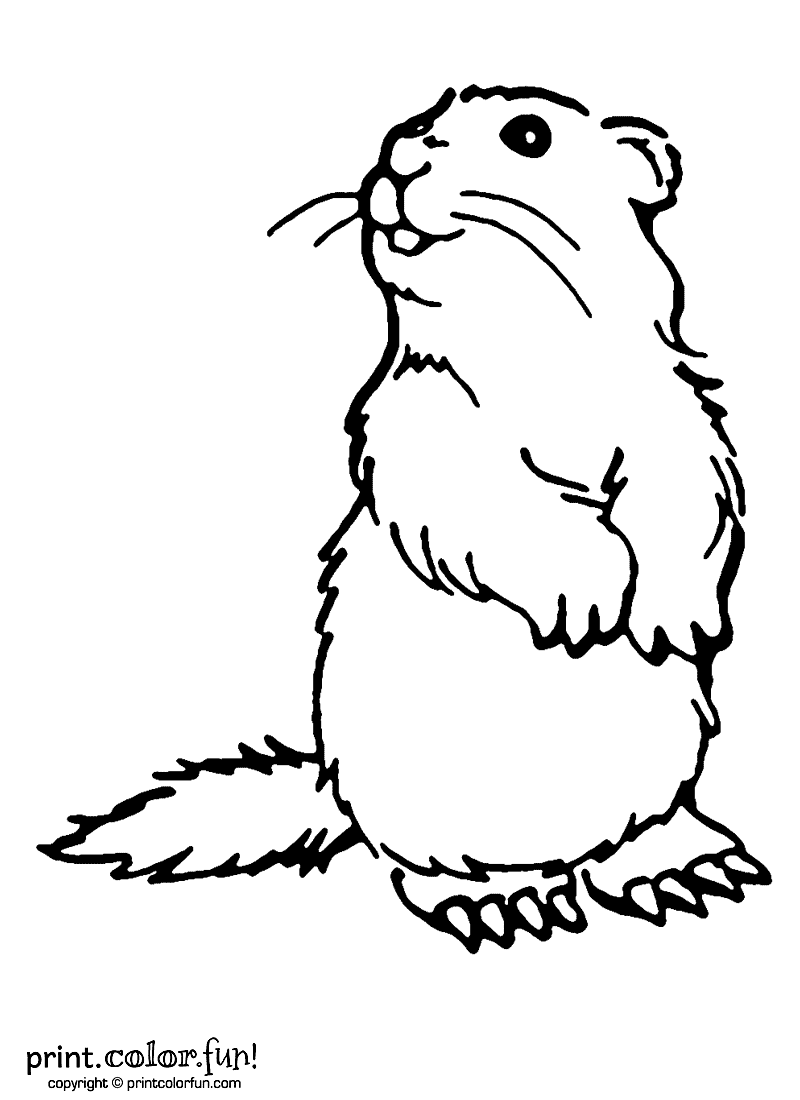 Woodchuck coloring page Print