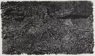 Rob Chapman, The Remains of a Moorhen, Wood engraving