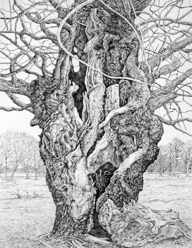 Aged Oak Tree Richmond Park 2020 - Eleanor Durbin