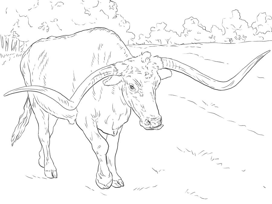 Coloring Pages Coloring Pages Bulls Printable For Kids Adults Free