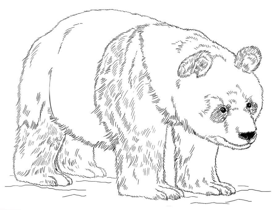 ausmalbilder: ausmalbilder: großer panda zum ausdrucken