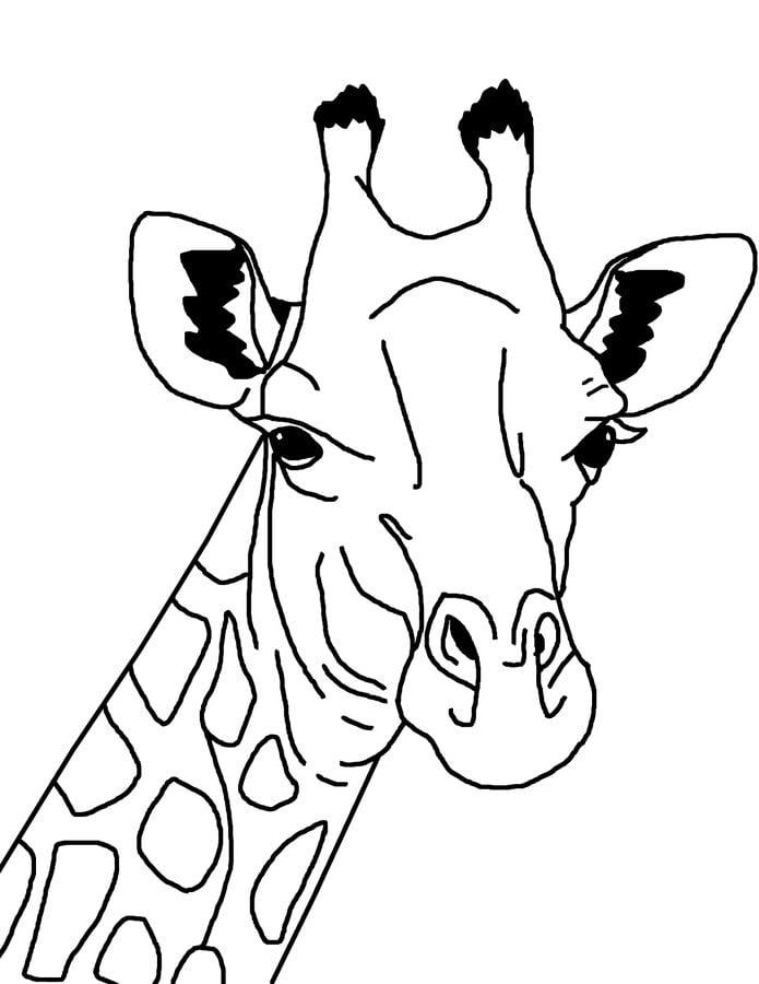 ausmalbilder ausmalbilder giraffen zum ausdrucken