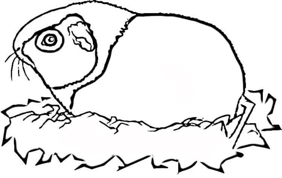 Ausmalbilder Ausmalbilder Meerschweinchen Zum Ausdrucken Kostenlos Fur Kinder Und Erwachsene