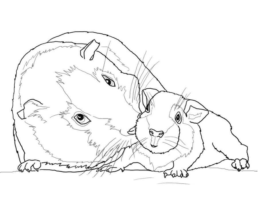 Ausmalbilder Ausmalbilder Meerschweinchen Zum Ausdrucken