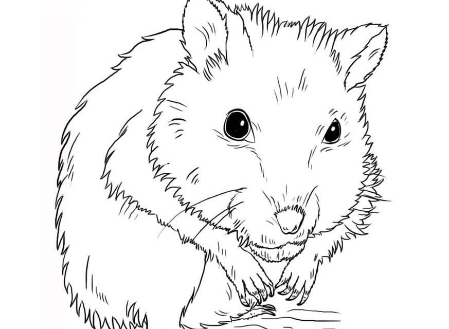 ausmalbilder ausmalbilder hamster zum ausdrucken