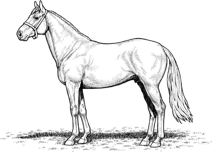ausmalbilder pferde  ausmalbilder pferde mytoys blog
