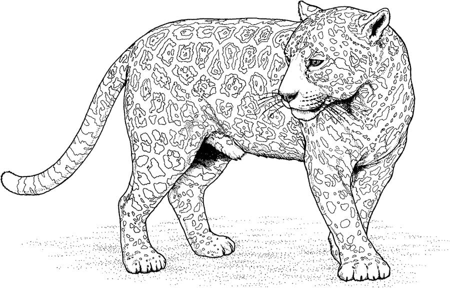 Coloring Pages Coloring Pages Jaguar Printable For Kids Adults Free