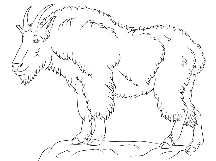 Coloring Pages Coloring Pages Mountain Goat Printable For Kids Adults Free