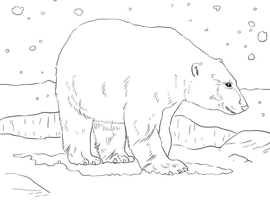 Ausmalbilder Ausmalbilder Eisbär Zum Ausdrucken Kostenlos Für