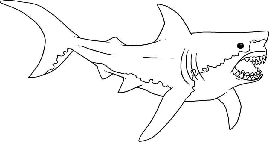ausmalbilder ausmalbilder blauhai zum ausdrucken