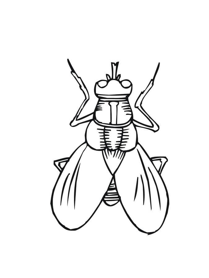 disegni da colorare mosca stampabile gratuito per
