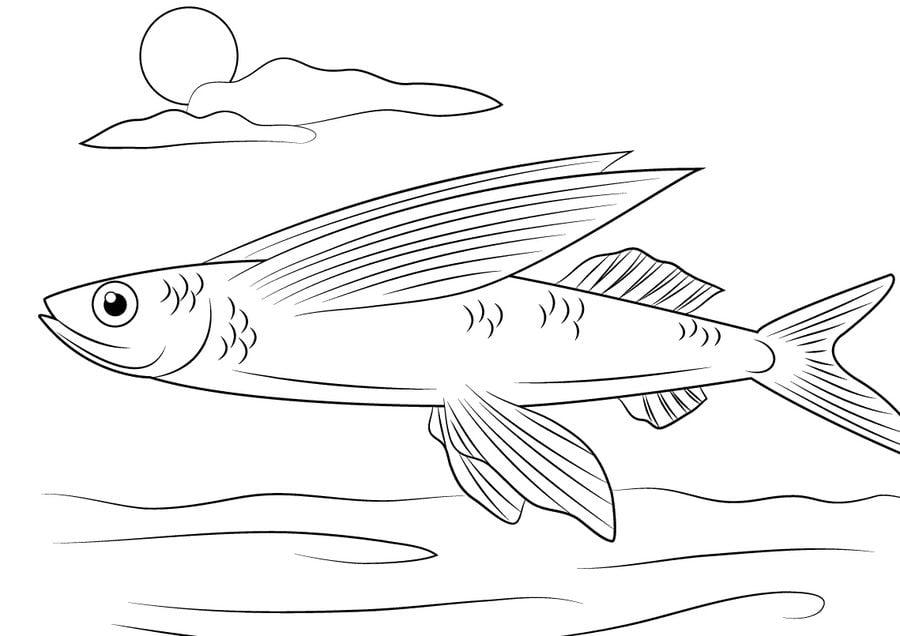 ausmalbilder ausmalbilder fliegende fische zum