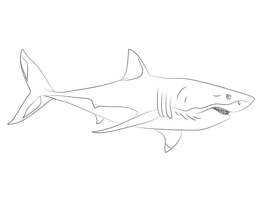 Dibujos Para Colorear Gran Tiburón Blanco Imprimible