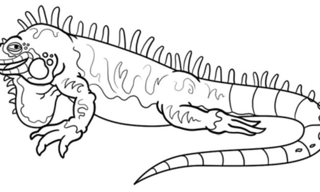 Ausmalbilder: Leguane