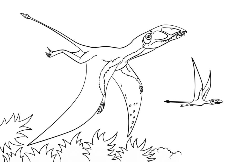 Coloring Pages Coloring Pages Pterodactyl Printable For Kids Adults Free