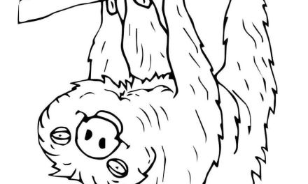 Coloring pages: Sloth