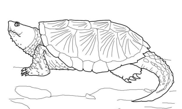 Ausmalbilder: Sumpfschildkröte