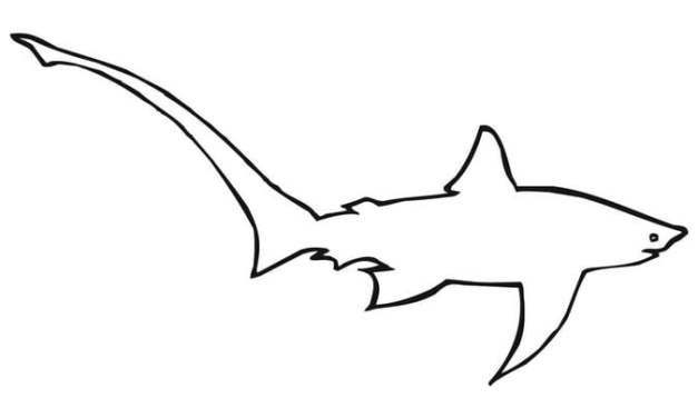 Ausmalbilder: Fuchshaie