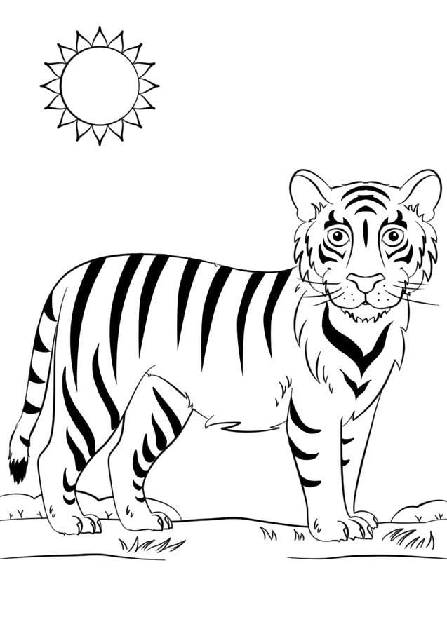 36 Tiger Ausmalbilder Zum Ausdrucken Kostenlos Besten Bilder Von Ausmalbilder