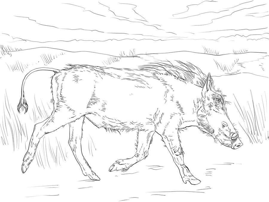 Coloring pages: Coloring pages: Warthog, printable for