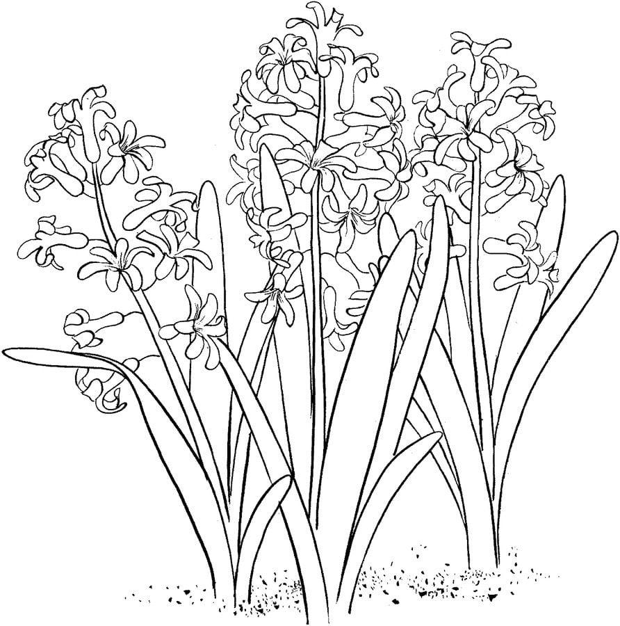ausmalbilder ausmalbilder hyazinthen zum ausdrucken