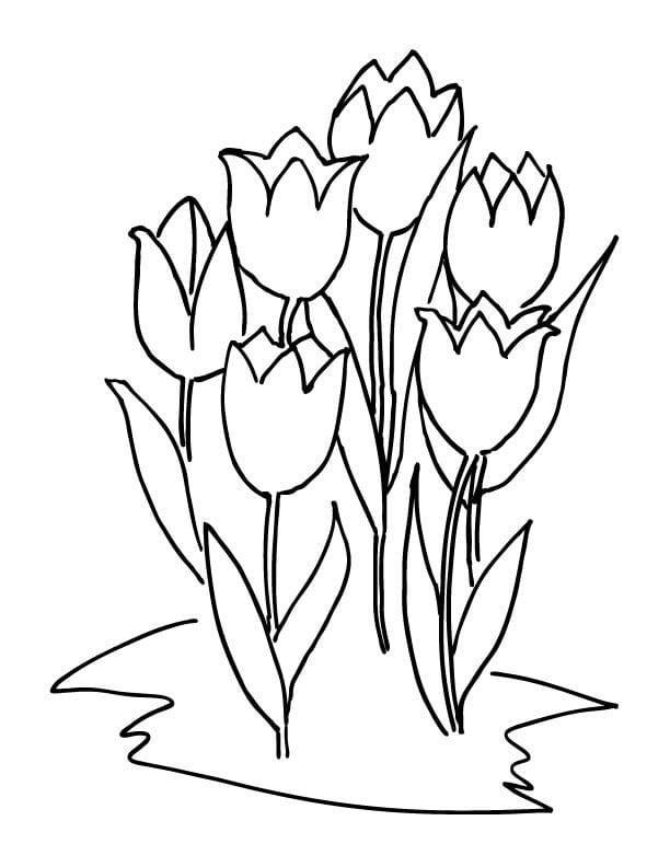 ausmalbilder tulpen ausdrucken - kostenlos zum ausdrucken