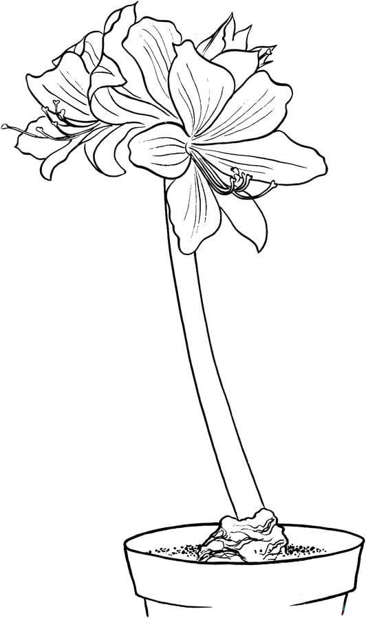 ausmalbilder ausmalbilder amaryllis zum ausdrucken