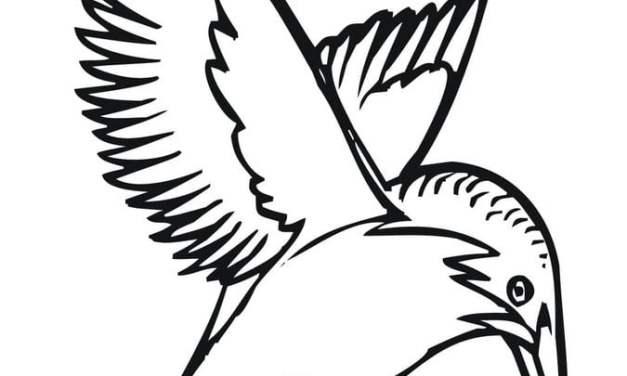 Ausmalbilder: Eisvogel