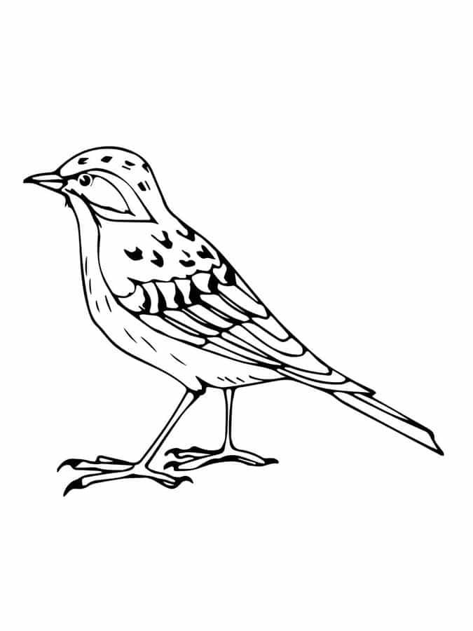lerche vogel ausmalbild  kinder ausmalbilder